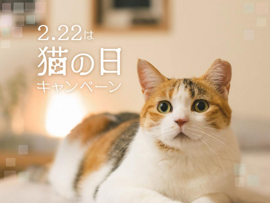 2.22は猫の日キャンペーン
