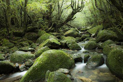 苔むす森(鹿児島県)